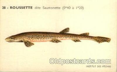fis001119 - Roussette Fish Fishing Postcard Post Card