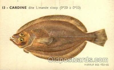 fis001120 - Cardine Fish Fishing Postcard Post Card