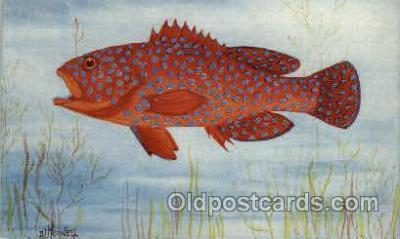 fis001130 - Madras Fishes Fish Fishing Postcard Post Card