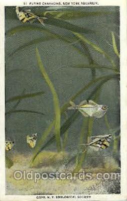 fis001132 - Aquarium, New York, USA Fish Fishing Postcard Post Card