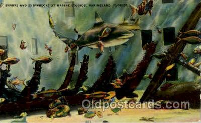 fis001137 - Marineland, Florida USA Fish Fishing Postcard Post Card