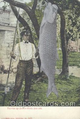 fis001158 - Tarpon or Silver King 240 IbsTarpon or Silver King 240 Ibs. Fishing Postcard Post Card