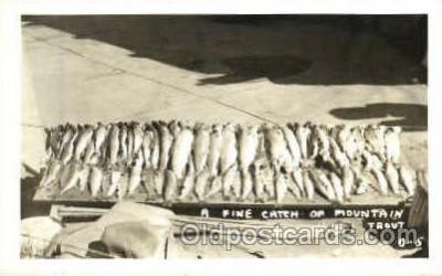 fis001183 - Fishing Postcard Post Card