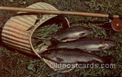 fis001266 - Mountaintrout Fishing Postcard Post Card