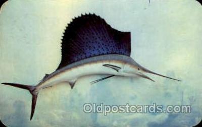 fis001269 - Sailfish Fishing Postcard Post Card