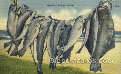 fis001275 - Record Catch Florida, USA Fishing Old Vintage Antique Postcard Post Card
