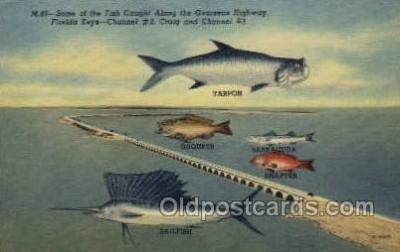 fis001276 - Florida Keys, USA Fishing Old Vintage Antique Postcard Post Card