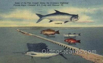 fis001277 - Florida Keys, USA Fishing Old Vintage Antique Postcard Post Card