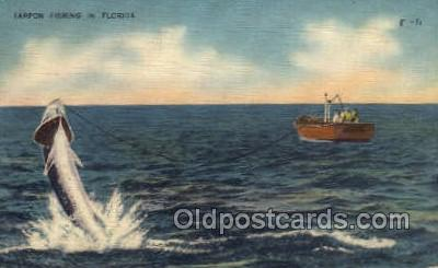 fis001301 - Tarpon Fishing, Florida USA Fishing Old Vintage Antique Postcard Post Card