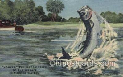 fis001333 - Florda USA Fishing Old Vintage Antique Postcard Post Card