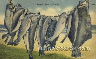 fis001341 - Florida, USA Fishing Old Vintage Antique Postcard Post Card