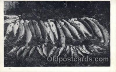 fis001386 - Fishing Old Vintage Antique Postcard Post Card