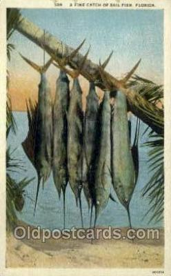 fis001443 - Sailfish in Florida, USA Fishing Old Vintage Antique Postcard Post Card