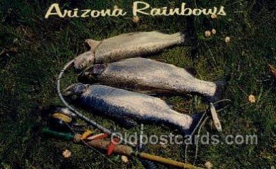 fis001486 - Arizona Rainbows Fishing Old Vintage Antique Postcard Post Card