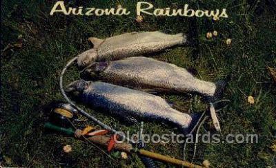 fis001487 - Arizona Rainbows Fishing Old Vintage Antique Postcard Post Card