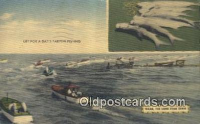 fis001566 - Tarpon Fishing Texas, USA Postcard Post Cards Old Vintage Antique