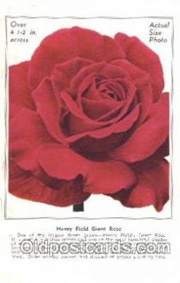 flr001098 - Giant Rose Flower, Adv, Henry Field Seed & Nursery Co.  Flowers, Postcard Post Card