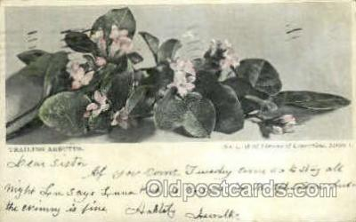 flr001100 - Trailing Arbutus Flower, Flowers Postcard Post Card