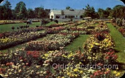 flr001102 - Jackson and Perkins Rose Garden, Newark, New York, USA Flower, Flowers Postcard Post Card