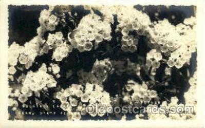 flr001103 - Mountain Laurel, Conn. State Flower Flower, Flowers Postcard Post Card