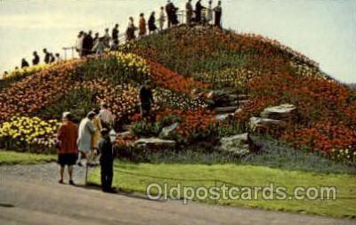 flr001107 - OTT's Exotic, Greenhouse Flower, Flowers Postcard Post Card
