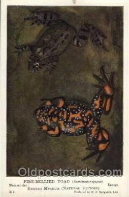 frg009 - Frog Postcard Post Card