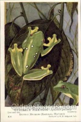 frg012 - Frog Postcard Post Card