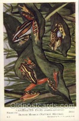 frg031 - Frog Postcard Post Card