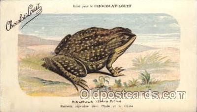 frg036 - Frog Postcard Post Card