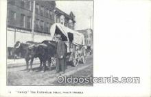 fam001028 - Dandy, Unbroken Steer South Omaha, USA Postcard Post Cards Old Vintage Antique