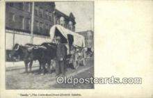 fam001030 - Dandy, Unbroken Steer South Omaha, USA Postcard Post Cards Old Vintage Antique