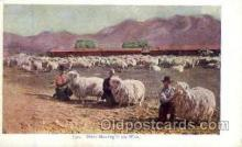 far001021 - Sheep Shearing, Farming Postcard Post Card