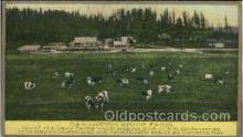 far001031 - Carnation Stock Farm, Farming Postcard Post Card
