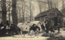far001067 - Gathering Sap in Vermont Farming Postcard Post Card