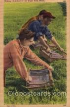far001090 - Cranberry Picking, Cape Cod, Massachusets Farming Postcard Post Card