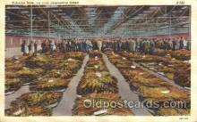 far001094 - Tobacco Farming, Farm, Farmer, Postcard Postcards