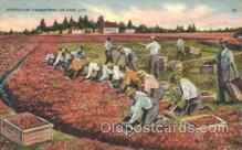 far001109 - Harvesting Farming, Farm, Farmer, Postcard Postcards