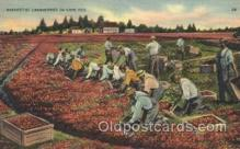 far001110 - Harvesting Farming, Farm, Farmer, Postcard Postcards