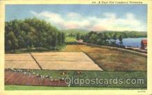 far001111 - Cranberries Farm Farming, Farm, Farmer, Postcard Postcards
