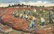 far001112 - Harvesting Farming, Farm, Farmer, Postcard Postcards