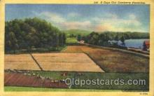 far001114 - Cranberries Farm Farming, Farm, Farmer, Postcard Postcards