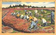 far001115 - Harvesting Farming, Farm, Farmer, Postcard Postcards