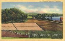 far001116 - Cranberries Farm Farming, Farm, Farmer, Postcard Postcards