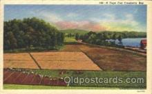 far001117 - Cranberries Farm Farming, Farm, Farmer, Postcard Postcards
