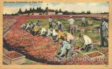 far001118 - Harvesting Farming, Farm, Farmer, Postcard Postcards