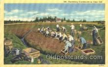 far001119 - Harvesting Farming, Farm, Farmer, Postcard Postcards