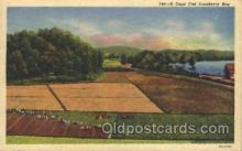 far001120 - Cranberries Farm Farming, Farm, Farmer, Postcard Postcards
