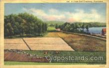 far001123 - Cranberries Farm Farming, Farm, Farmer, Postcard Postcards