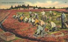 far001130 - Harvesting Farming, Farm, Farmer, Postcard Postcards