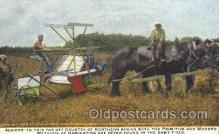far001135 - Algieria Farming, Farm, Farmer, Postcard Postcards